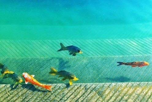 fish variety SaaS Blog Posts Are Just The Beginning